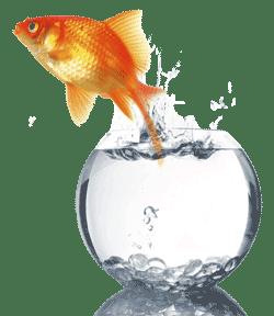 goldfish_bowl_2