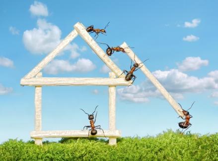 Teamwork-ants-building-a-house
